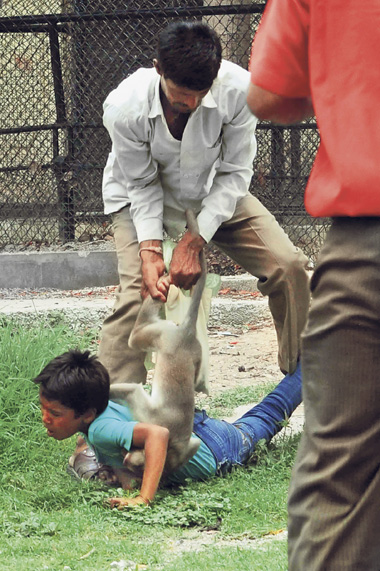 Irate Monkey Attacked A Small Child In A Zoo In Ratlam, India