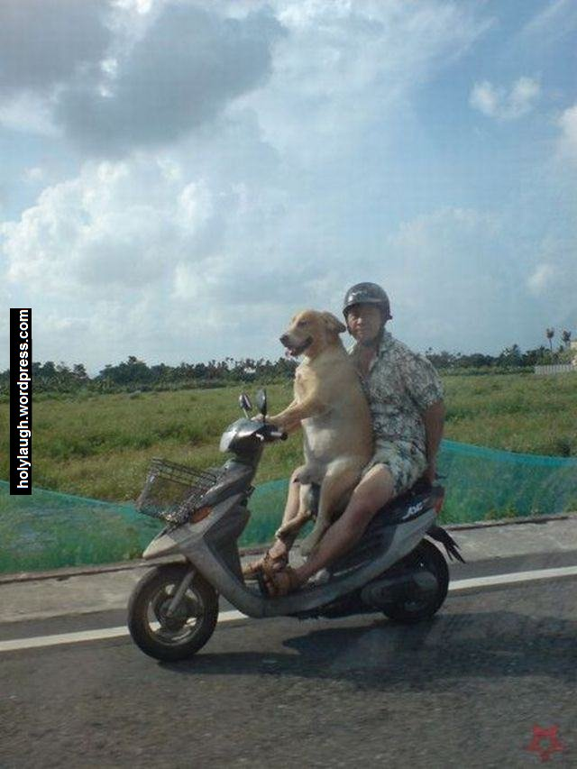 Oh yes, my dog is a scooter driver