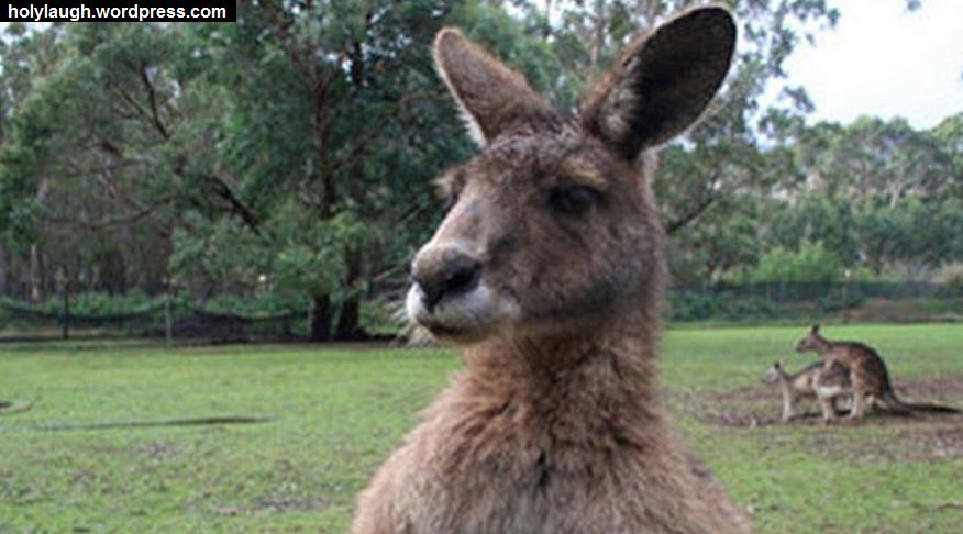 kangorooing