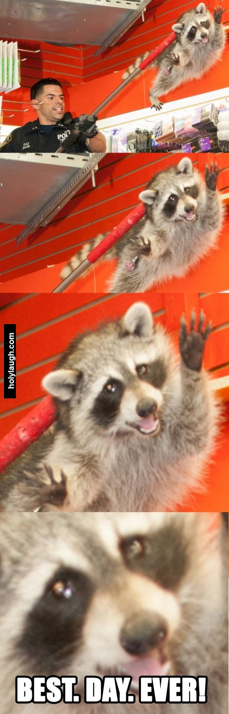 Racoon best day ever