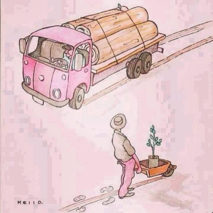 tree-log